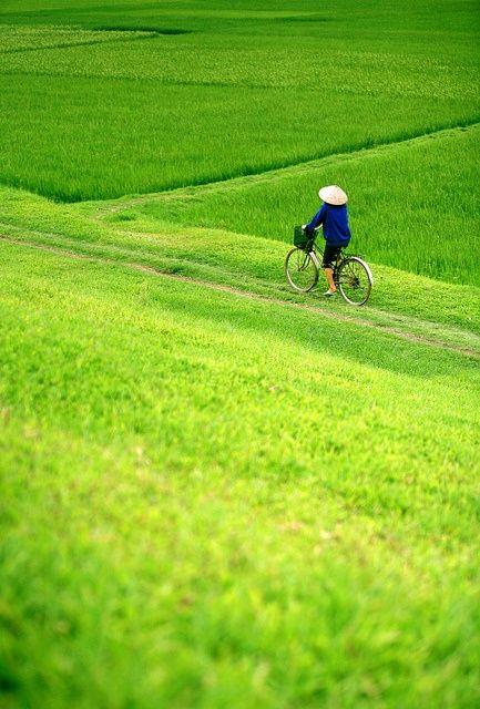 optimisation-image-wordpress-google-vietnam-ornormes-fr